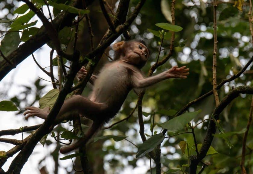 Babyaffe Monkey Forest Ubud Bali