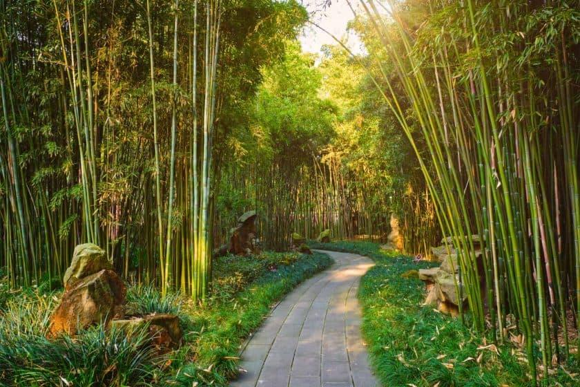 Wangjiang Pavilion Bambus Chengdu China