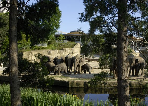 Kölner Zoo Elefantenpark Außengehege