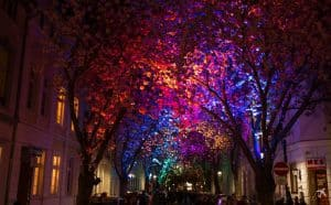 Kirschblüte Altstadt, Bonn