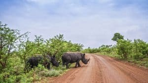 Kruger Nationalmark, Südafrika