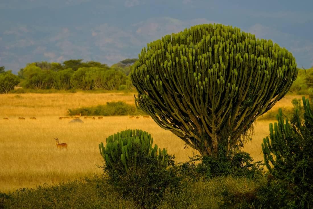 Queen Elizabeth National Park, Rubirizi, Uganda