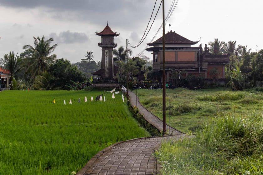 Reisfeld Ubud Bali