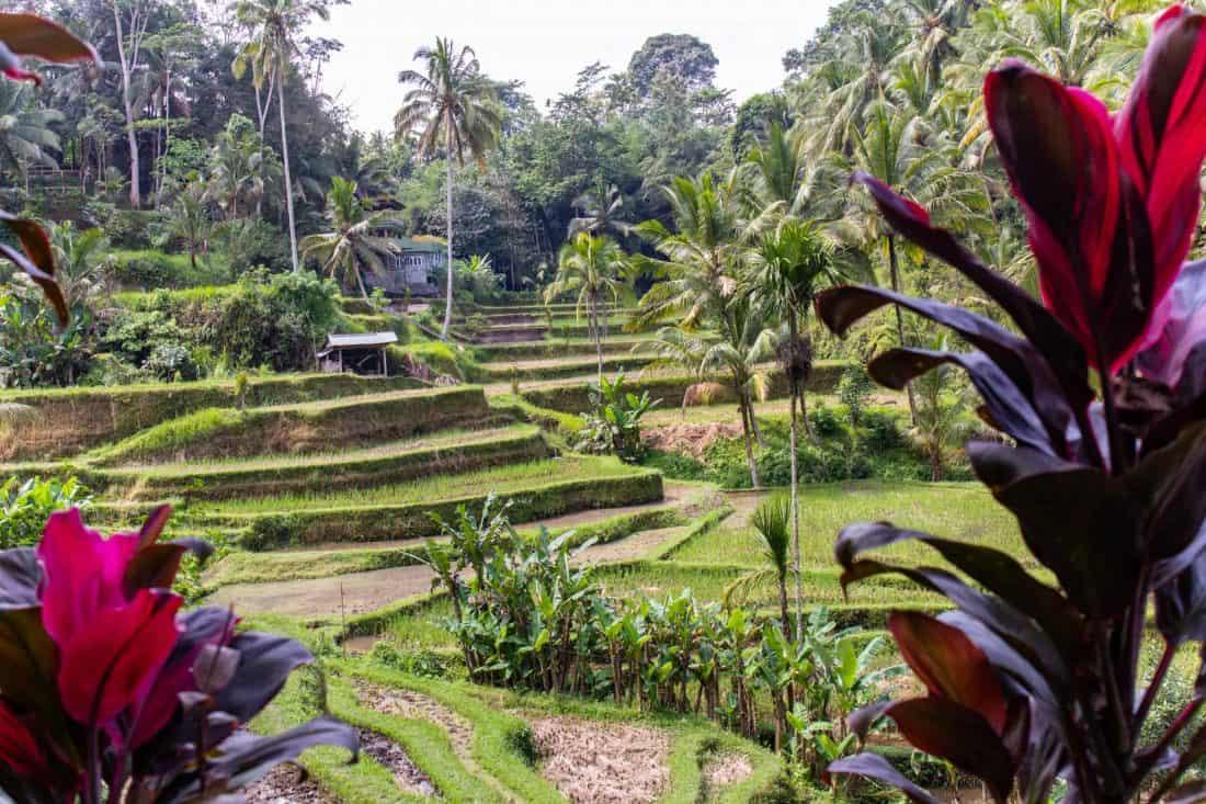 Reisterrassen Tegalalang Bali 2