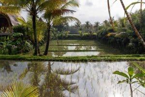 Reisterrassen Ubud Bali