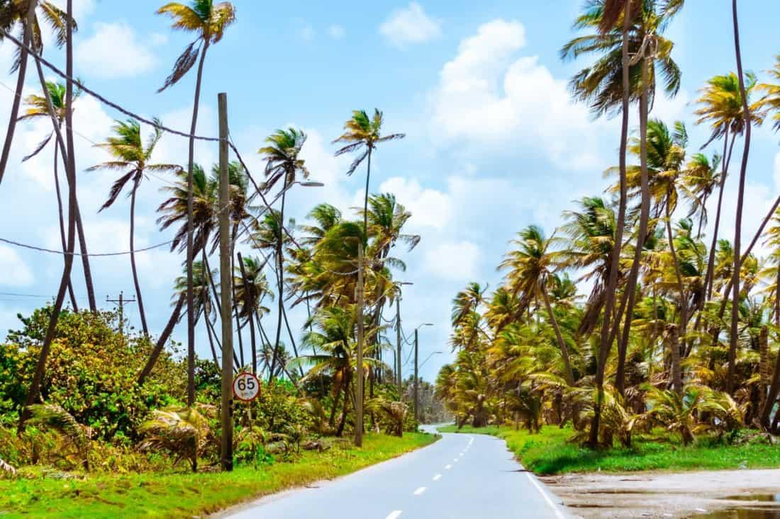 Strasse auf Trinidad und Tobago