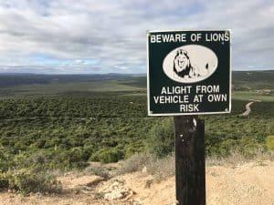 Südafrika Beware of Lions