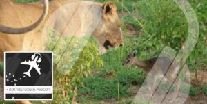 Titelbild Podcast Suedafrika