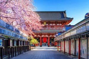 Tokio Japan Tempel mit Kirschblüten