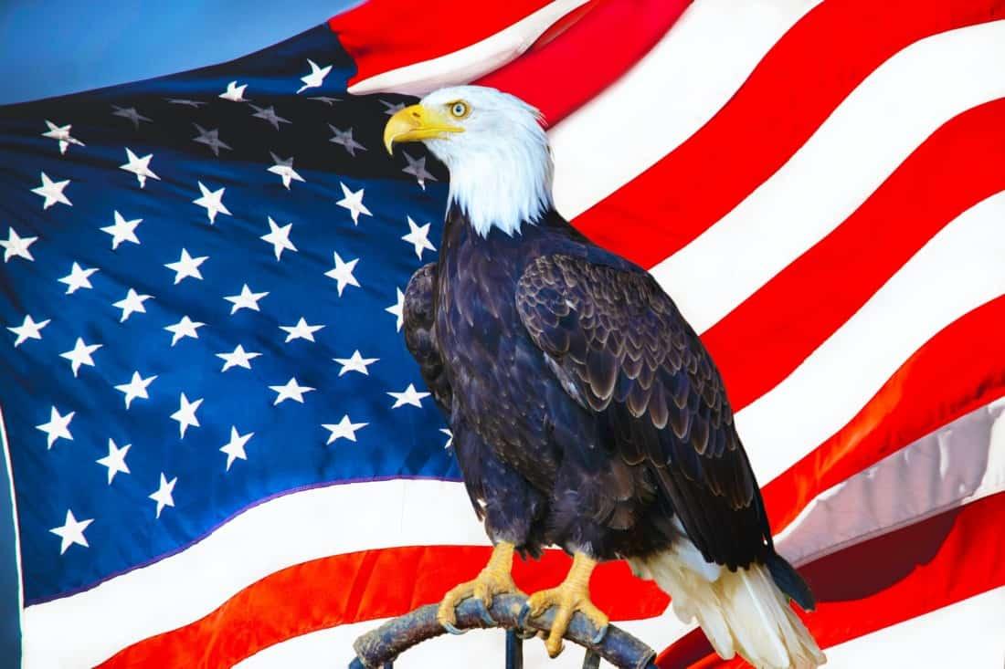 USA Flagge Adler