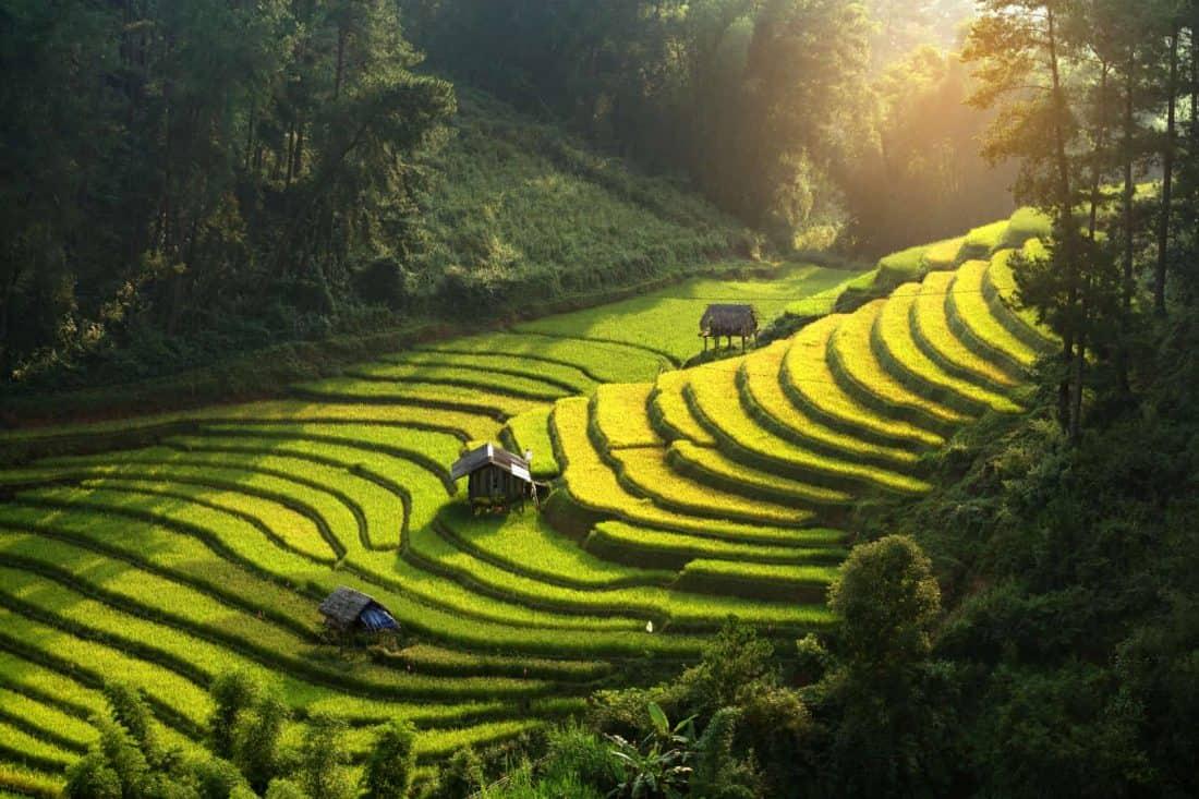 Vietnam Reisterrassen