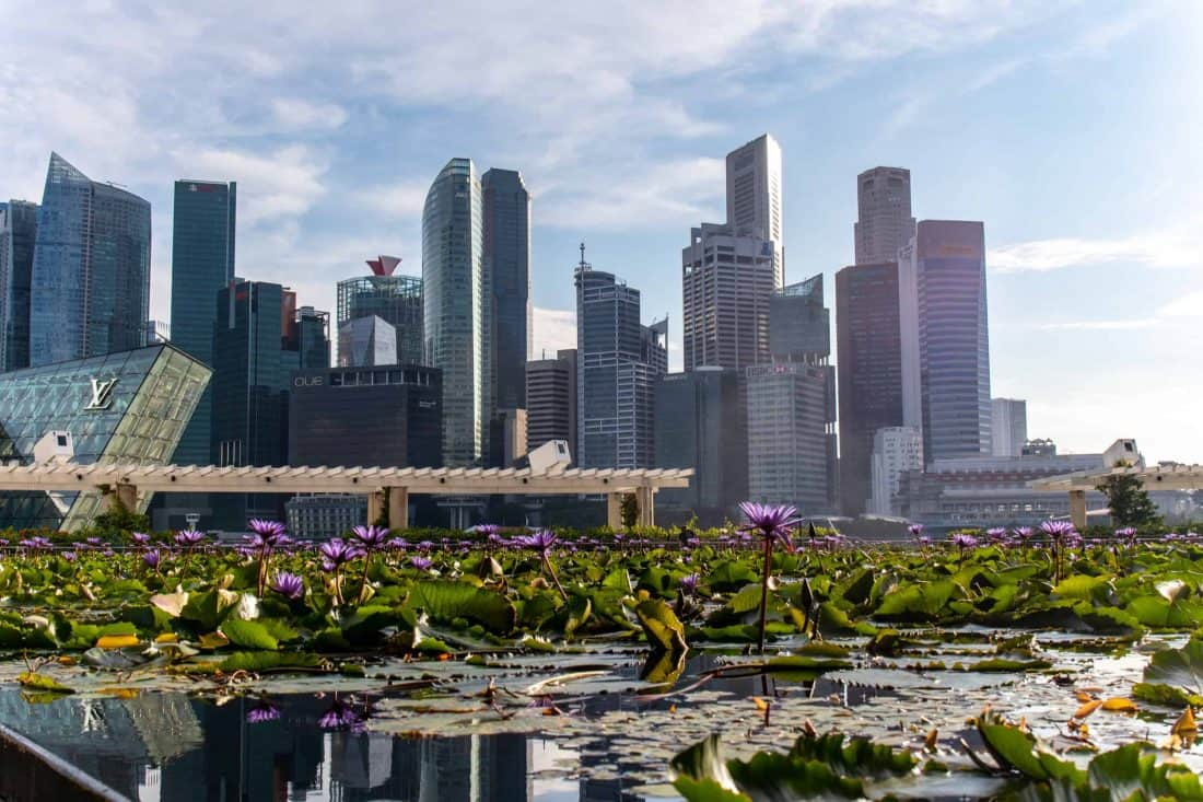 Wasserrosen Skyline Marina Bay Singapur
