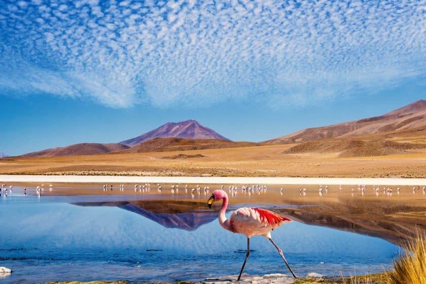 Bolivien Lagune Flamingo