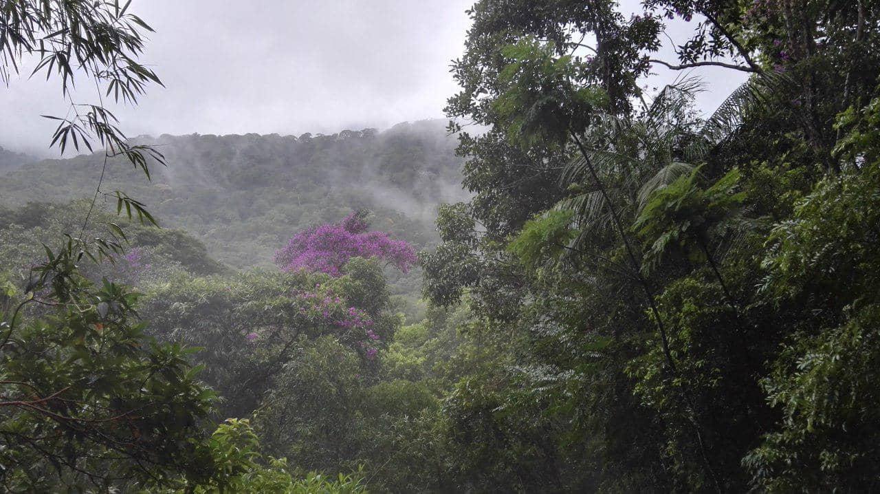 rio janeiro jungle